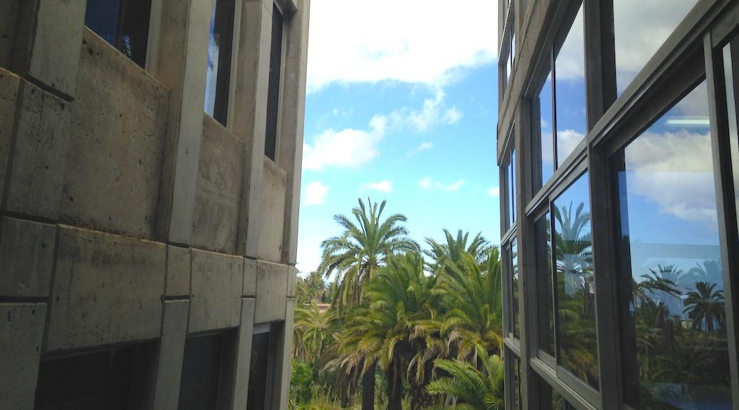 Vista del palmeral exterior desde la Escuela de Arquitectura de Las Palmas de Gran Canaria